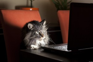 o-cat-laptop-facebook.jpg